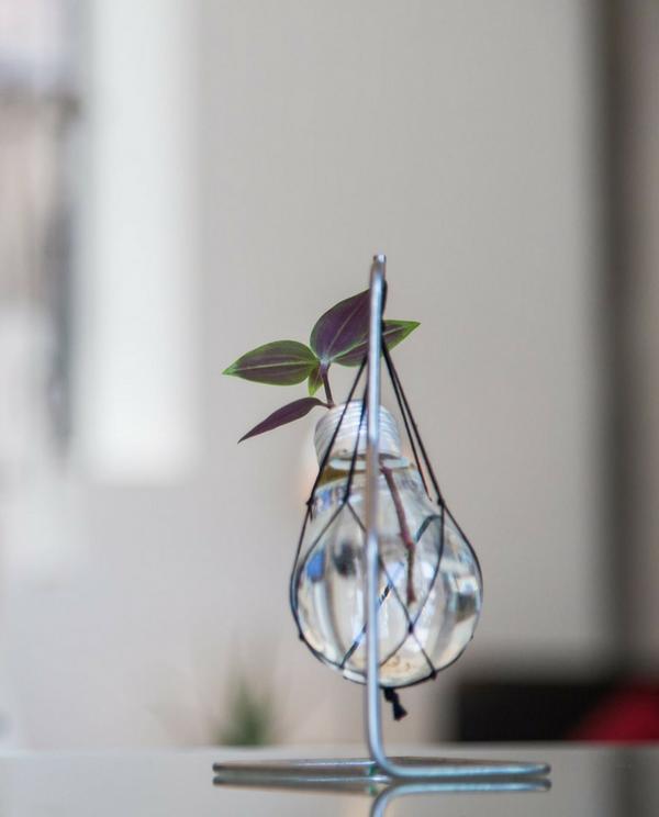 ampoule renversée free wind custom